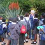 Naluxolo Kids & Aloe 2017